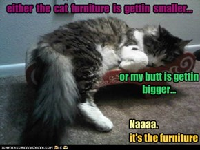 either  the  cat  furniture  is  gettin  smaller...