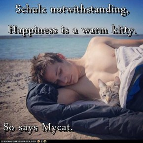 Schulz notwithstanding, Happiness is a warm kitty.  So says Mycat.