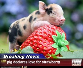 Breaking News - pig declares love for strawberry
