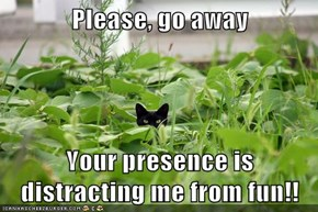 Please, go away  Your presence is distracting me from fun!!