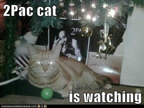 2Pac cat  is watching