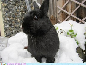Reader Squee: Snow Bunny Squee