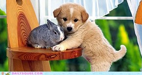 Daily Squee: Interspecies Love - Can't Get Any Cuter