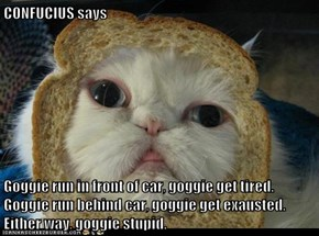 CONFUCIUS says  Goggie run in front of car, goggie get tired. Goggie run behind car, goggie get exausted. Either way, goggie stupid.