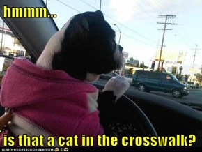 hmmm...  is that a cat in the crosswalk?