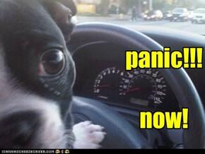 PanicDog in traffic