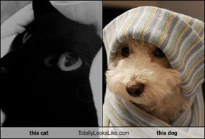 this cat Totally Looks Like this dog