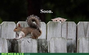 The Early Cat Gets the Squirrel