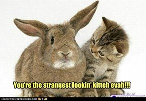 You're the strangest lookin' kitteh evah!!!