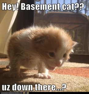 Hey! Basement cat??  uz down there...?
