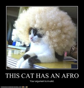 THIS CAT HAS AN AFRO