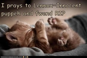 I prays to Lennox~Innocent puppeh and fwend RIP