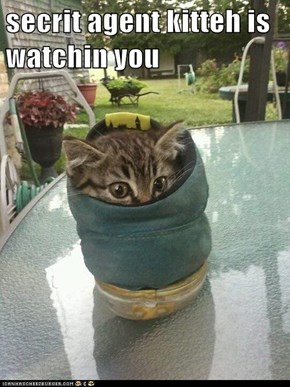 secrit agent kitteh is watchin you