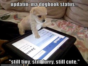 "updatin' ma dogbook status...  ""still tiny, still furry, still cute."""