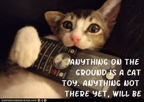 Cat Truisms - toy