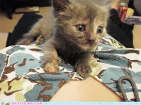 Phaedra baby