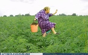 It's Hard to Be Sad When You're Strolling Through a Field of Weed