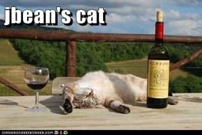 jbean's cat