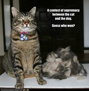 A contest of supremacy between the cat  and the dog.