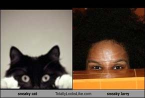 sneaky cat Totally Looks Like sneaky larry