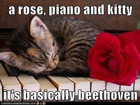 a rose, piano and kitty  it's basically beethoven