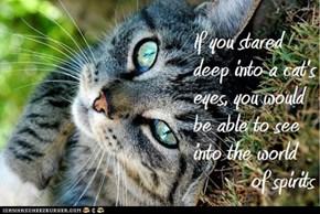 Cat Truisms - spirits