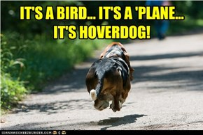 IT'S A BIRD... IT'S A 'PLANE... IT'S HOVERDOG!