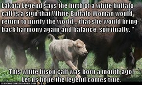 "Lakota Legend says the birth of a white buffalo calf is a sign that White Buffalo Woman would return to purify the world... that she would bring back harmony again and balance, spiritually. ""  This white bison calf was born a month ago!               Let"