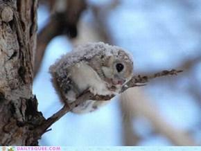Tiny Snowball