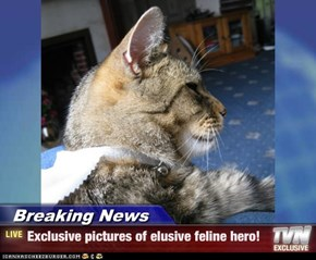 Breaking News - Exclusive pictures of elusive feline hero!