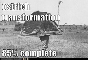 ostrich transformation  85% complete