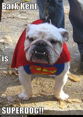 Bark Kent is SUPERDOG!!