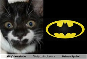 Kitty's Moustache Totally Looks Like Batman Symbol