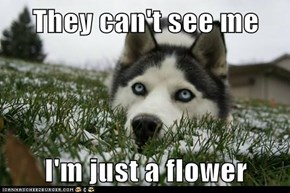 They can't see me  I'm just a flower