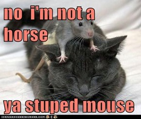 no  i'm not a horse   ya stuped mouse