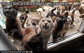This is Allcatsloved house K were here