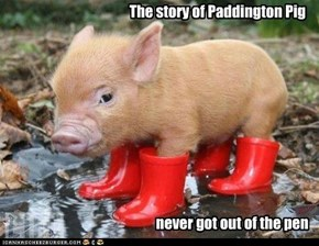 The story of Paddington Pig