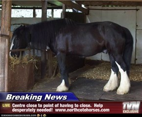 Breaking News - Centre close to point of having to close.  Help desperately needed!  www.northcotehorses.com