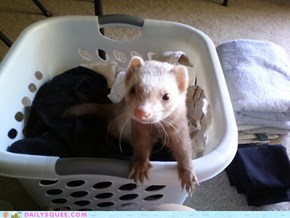 Reader Squee: My Laundry! Mine!
