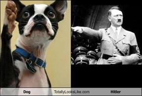 Dog Totally Looks Like Hitler
