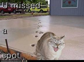U missed a  spot
