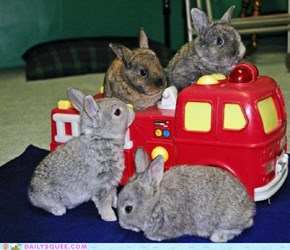 Daily Squee: Bunday: Bunny Bus