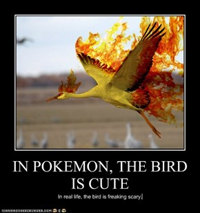 IN POKEMON, THE BIRD IS CUTE