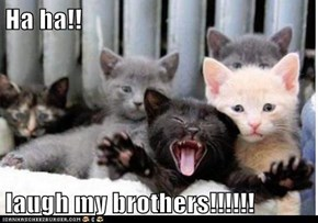 Ha ha!!  laugh my brothers!!!!!!