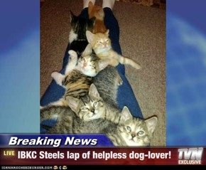 Breaking News - IBKC Steels lap of helpless dog-lover!