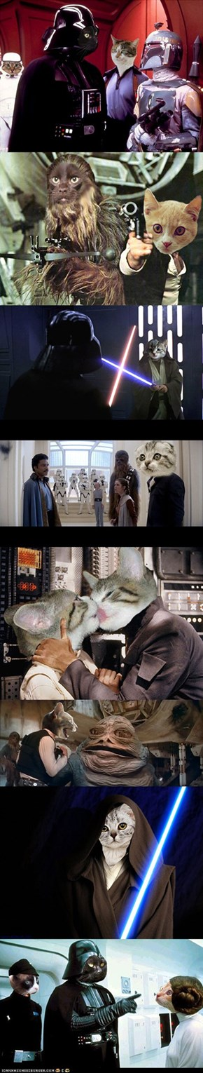 Famous 'Star Wars' Scenes Redone With Cats