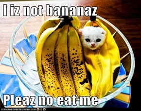 I iz not bananaz  Pleaz no eat me