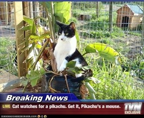 Breaking News - Cat watches for a pikachu. Get it, Pikachu's a mouse.