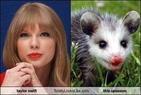 taylor swift Totally Looks Like this opossom