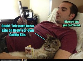 Oooh!  Teh store hazza sale on Grow-Yor-Own CatNip Kits.
